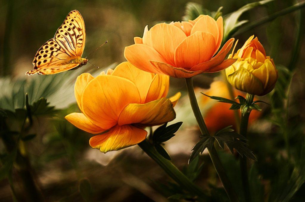 plaisirdetresoi-plaisir etre soi-beltane-accueillir energie de beltane-printemps-saison claire-celte-celtisme-paganisme-feu de bel-fleur-papillon-transformation