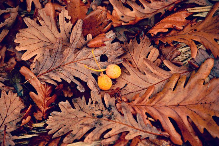plaisirdetresoi-plaisir etre soi- cle pour avancer-evoluer-se realiser-coaching-meditation-oak-leaf