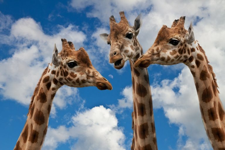 Plaisirdetresoi-plaisir detre soi-se sentir envahi-envahir-envahissement-coaching-confiance en soi-formation-developpement-personnel-meditation-yoga-giraffes
